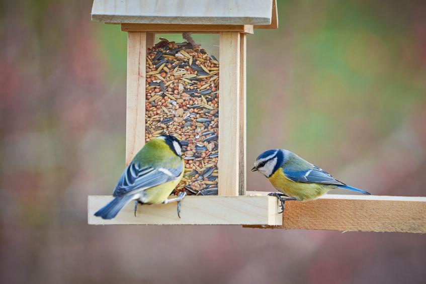 madáretető és madáritató