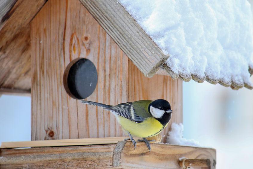 madáretetők madáritatók